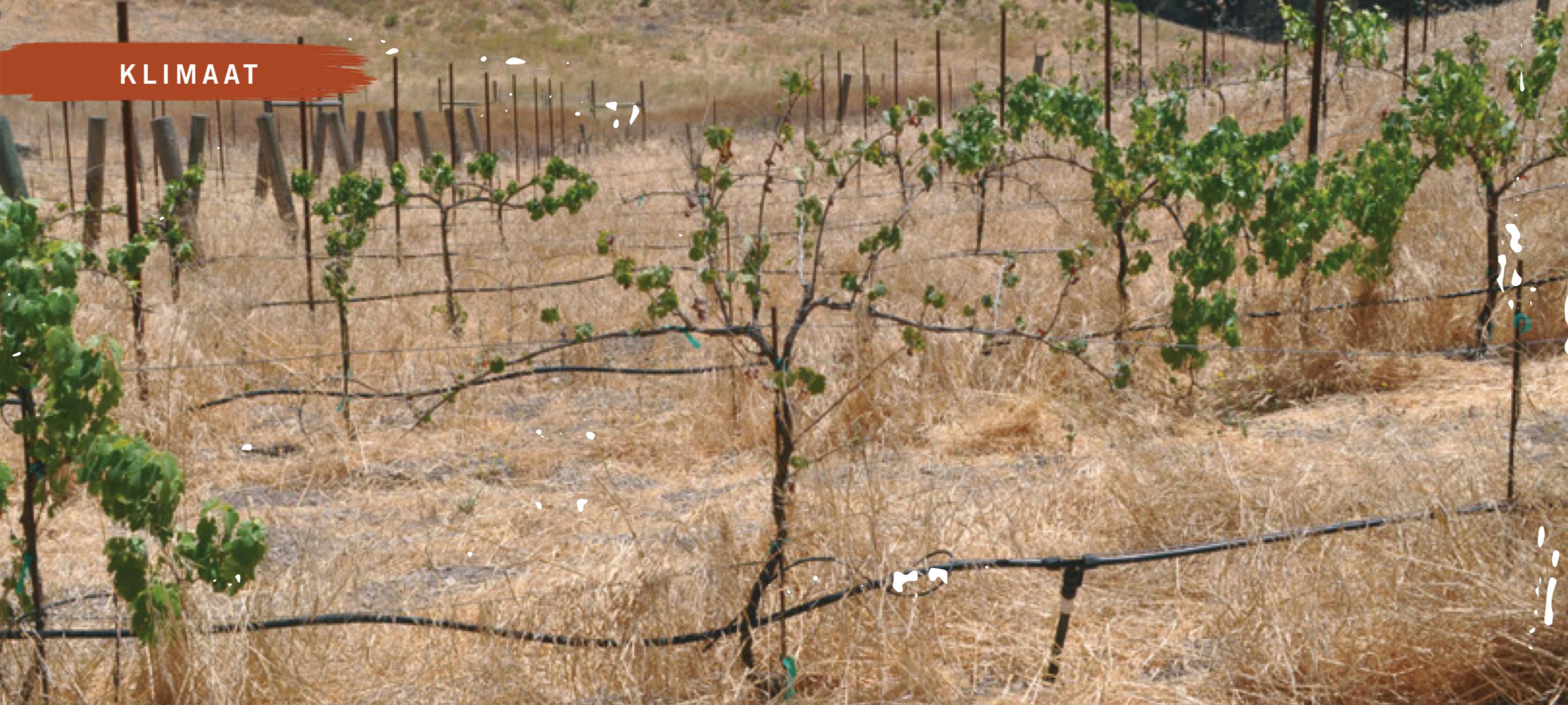 Klimaat & Wijnbouw