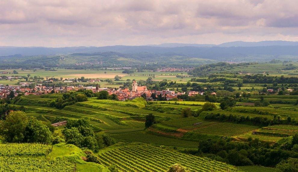 4 bestemmingen voor jouw perfecte wijnvakantie