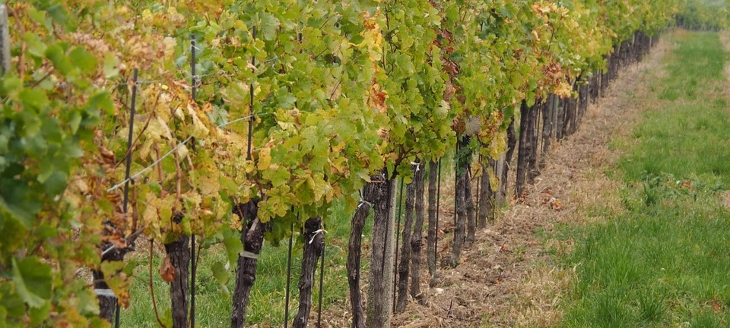 Duurzame en biologische wijnen