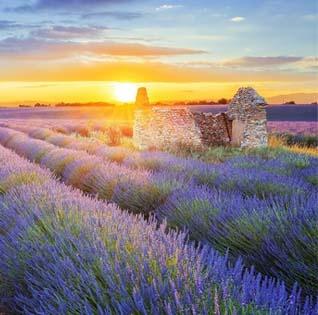 Provence wijnen
