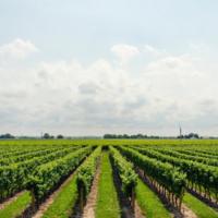 25 jaar wijn van Château Les Donats