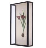 Painting Cabinet Fritillaria