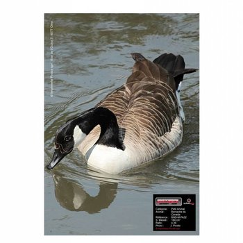 Maximal SMALL ANIMALS 30X40 CANADIAN GOOSE