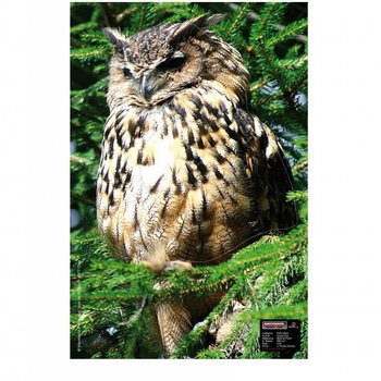 Maximal SMALL GAME 40X60 OWL