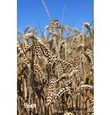 Mudis Mudis® ecologisch speltkaf voedingskussen 150x30, incl. overtrek in diverse uitvoeringen.