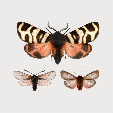 Liljebergs Liljebergs macro mini print butterfly