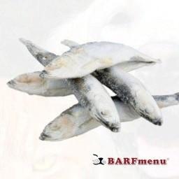 BARF Herring