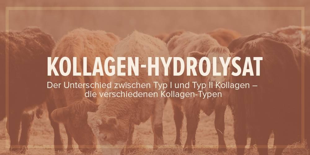 Kollagen-Hydrolysat: Der Unterschied zwischen Gelatine und den verschiedenen Typen