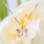 "KAYA sieraden Silver Necklace ""Imagine yourself together '- with graveerbedel option - Copy"