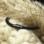 Sieraden graveren Zwarte Rundleren Herenarmband met Initialen