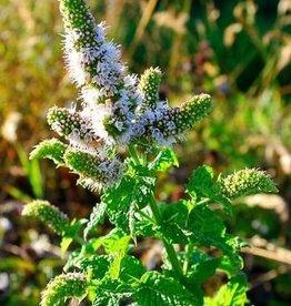 Farfalla Groene munt (Arabische Minze/Nana) BIO 5 ml.