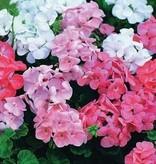 Farfalla Demeter gecertificeerde biologische rozen geranium etherische olie