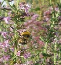 Farfalla Hysop  (Ysop) BIO-demeter 5 ml.