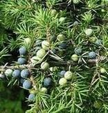 Farfalla Jeneverbes etherische olie BIO grand cru 5 ml.