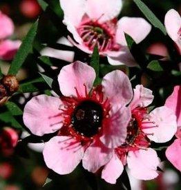 Farfalla Manuka BIO Wildpluk 5 ml.