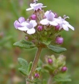 Farfalla Tijm (Thymian) ct Thymol BIO, demeter  5 ml.