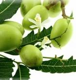 Neemolie (neemöl) koudgeperst biologisch, 100 ml.