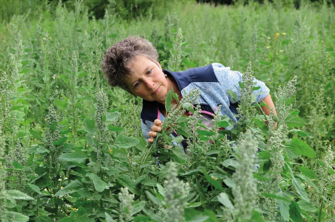 Vlog: Quinoa, waarom ben ik er fan van?
