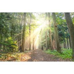 20 kilometer Voed-stappen met Rineke   21-06-2020