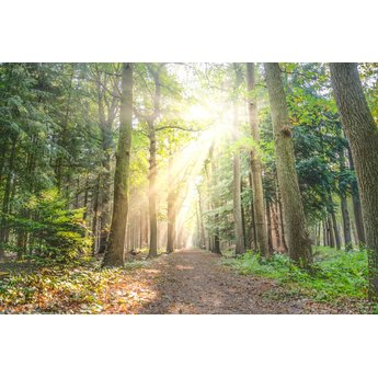 20 kilometer Voed-stappen met Rineke | 21-06-2020