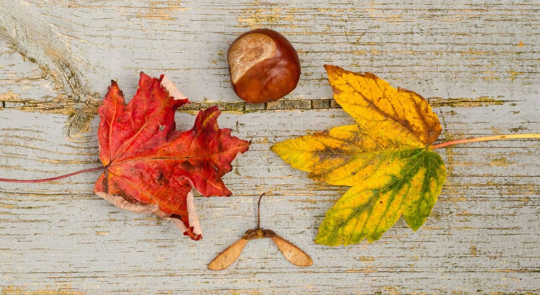 Laurent Perrier & dineren: een heerlijk herfstachtig gerecht