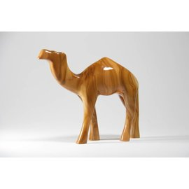 Desert Rose Baby kameel