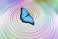 Vlinder met butterfly effect