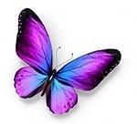 Violette vlinder