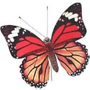 Nieuw: De Vlinder en haar symboliek