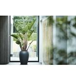 Elho Elho Pure Amphora- Antraciete bloempot 47cm H61cm -15% korting online bestellen!   - Copy