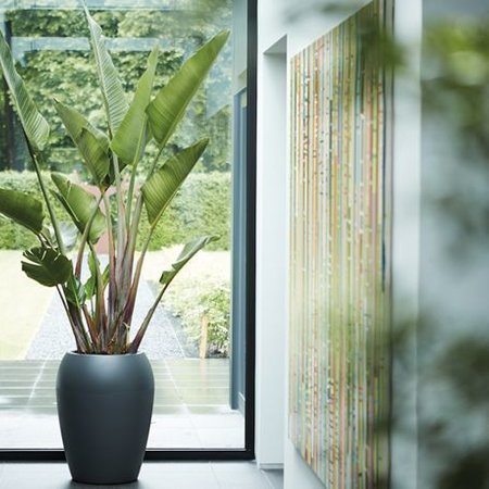 Elho Elho Pure Amphora- Antraciete pot de fleurs 55cm H71cmcm -15% de réduction commande en ligne!
