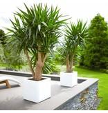 Elho Elho Pure Soft Brick wheels witte plantenbak 50 x 50cm H50cm - 15% korting online bestellen!