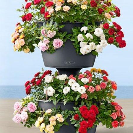 Lechuza Cascada couleur Flowerpot - Comprend Lechuza Irrigation