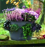 Lechuza Cascada Color Bloempot - Inclusief Lechuza Bewateringssysteem
