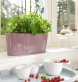 Lechuza Delta 10/20 Flowerpot - Belle conception, y compris Lechuza Irrigation