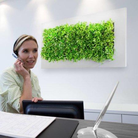 Live picture III Levend schilderij met echte planten!