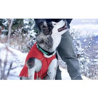 KURGO LOFT DOG COAT WINTERMANTEL verschiedene Farben