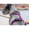 DOG Copenhagen Comfort Walk Harness Air