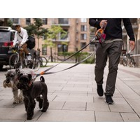 Leine Urban Trail Leash V2 in verschieden Farben und Größen