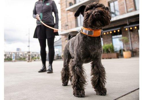 DOG Copenhagen V2 Explorer Collar  (Halsband)