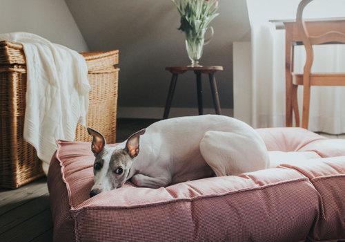 Hunter Hunde-Steppbett Lancaster