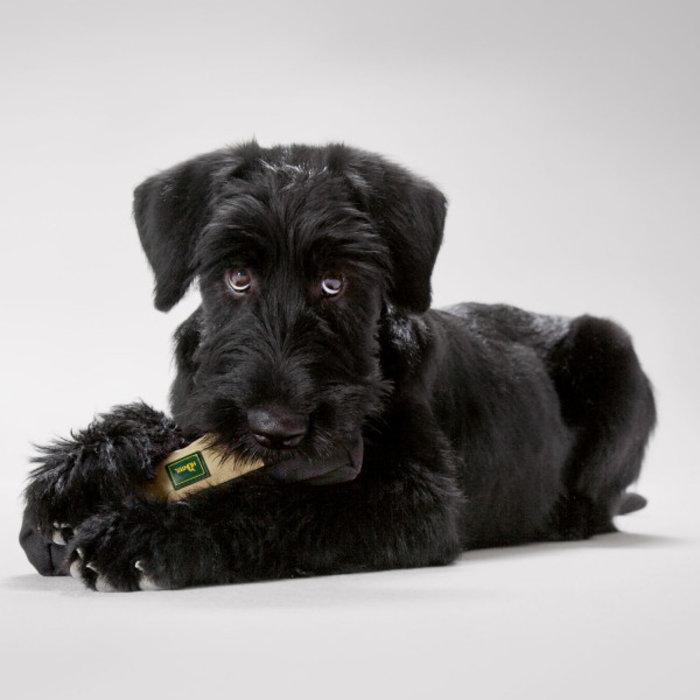 Spielzeug für Welpen oder kleinrassige Hunde