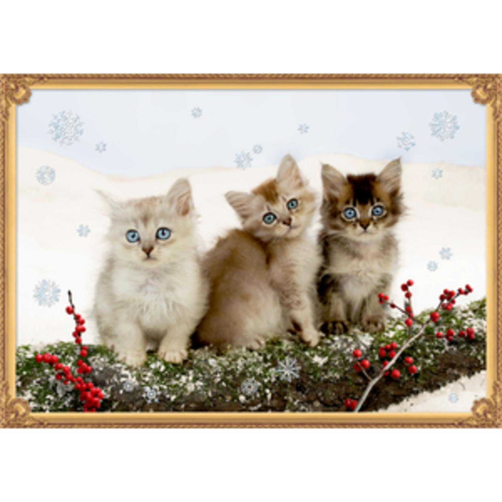 Coppenrath Adventskalender: Katzentrio im Schnee