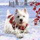 Coppenrath Wunderbare Hunde-Weihnacht, Wand-Adventskalender