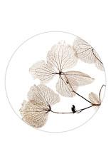 Zoedt Muurcirkel wit met gedroogde bladen