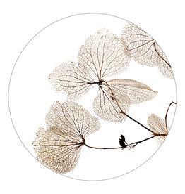Zoedt Muurcirkel wit met gedroogde bladen - in 2 formaten