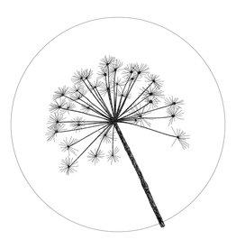 Zoedt Muurcirkel (binnen) wit met berenklauw - in 2 formaten