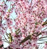 Blossom soap