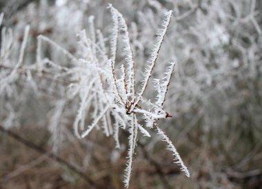 http://www.werfzeep.blog/wickenburghse-bos-nl/winter-op-wickenburgh/