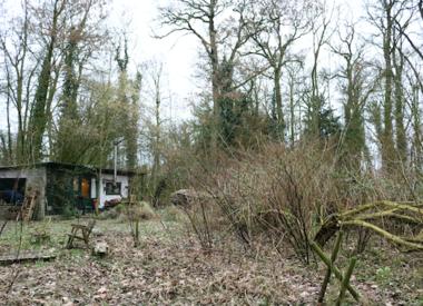http://www.werfzeep.blog/wickenburghse-bos-nl/woeste-winterupdate-wickenburgh-in-februari/